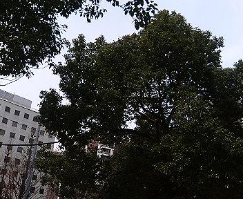 風で揺れる木々